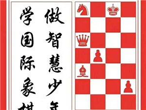 大萊西也有國際象棋啦!