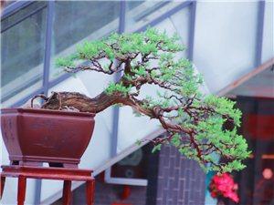 树木也可百年