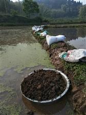 农机水稻种植不用化肥农药