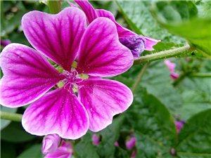 不知名的花,很漂亮