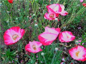 儿童乐园鲜花盛开