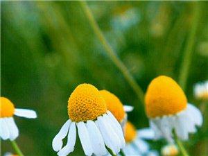 一片叶,落在哪里都是归宿;一朵花,开在哪里都是芳香;一双脚,走到哪里都是道路一颗心,安到哪里