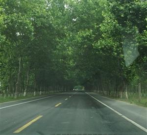 周末,走起!一路绿树成荫,风景如画!美焉,大美高梅注册!