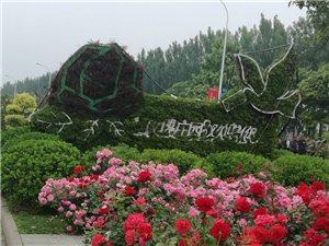 武清玫瑰庄园月季花节开幕