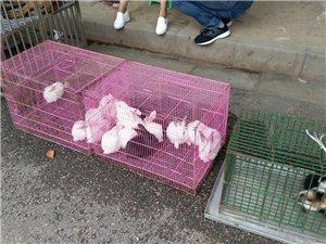 发现汉中宠物市场转移到益州路汉中市花卉交易中心门前的公路边上了。据说是双休日才出现。