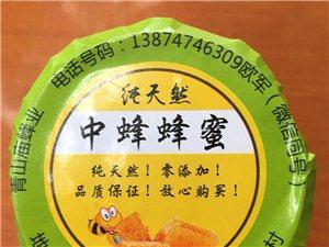 出售中华土蜜蜂蜂种/蜂蜜