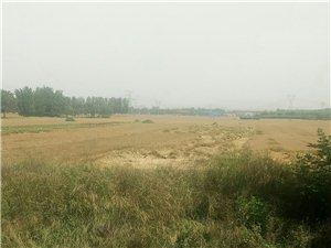 快该收麦子了,有人欢喜有人忧阿!麦子倒了,粮食减产,农民的收入减半!