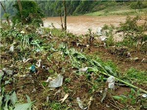 我承包的士地一个晚上成了拉圾回收区,上千根树子上全时拉圾,损失惨呀