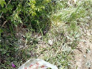园林局工作人员偷剪芍药花蕾太嚣张