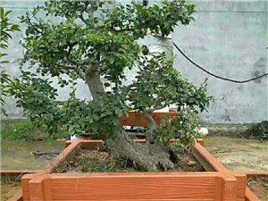 安徽桐城欧艺园林景观工程有限公司