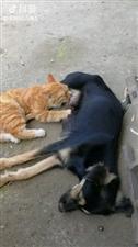 猫猫,那不是你妈妈