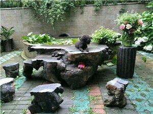 看朋友家的小花园