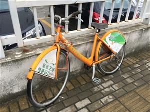 """广州公共自行车被""""共享""""到珠海了"""