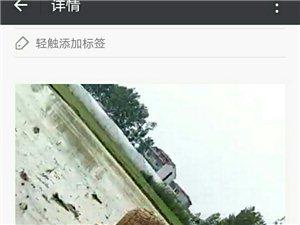 新店镇毛桥村有一家无赖