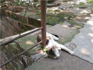 树荫下的懒猫