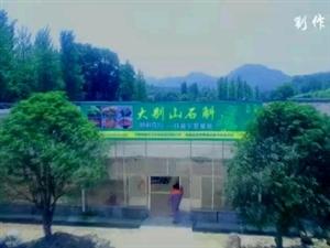 大别山石斛新县种植园