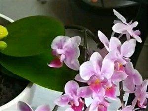 养得最好的一棵花。大家瞧瞧怎么样?