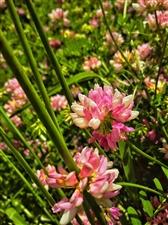 天竺山的花……