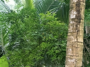 琼海市潭门赶海人家至长坡沿海柏油大道现己铺设至潭门镇文教一村,这条大道笔直宽大,两侧椰树丛林,可直观