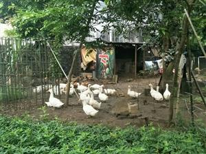 热议:下农村拍摄种养业带来的几点感悟: