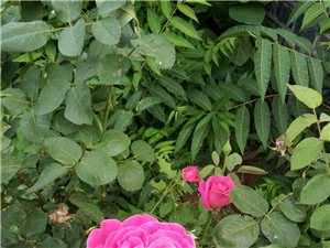 朵朵花�洪_的�G