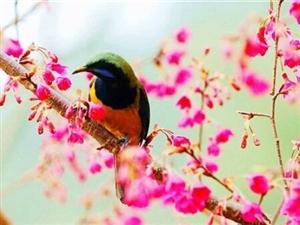 1.鸟累了,树知道,云累了,天知道。可是,我累了,谁知道?无忧无虑的日子也就那么几年,长大以后才发现