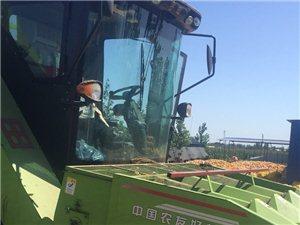 出售2017年玉米青贮机,工作400小时左右
