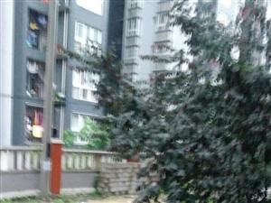城东办事处官垻居委,阳光花园46号楼后面,周家院子,污水管堵了近7年,现在污水都上路面了,希望政府能