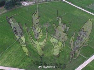 洋县的稻田艺术