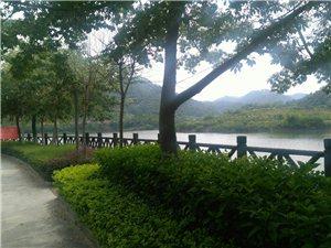 东龙森林公园,超级凉爽,避暑好地方。