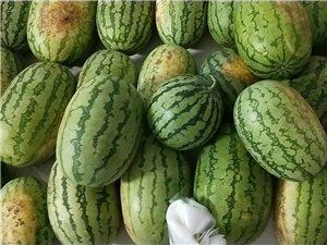 自家种的新鲜西瓜