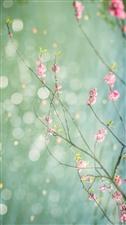七月的雨作者:王建林你来了,轻轻地我抿起一口小酒扶着你的一丝温柔打蔫的向日葵
