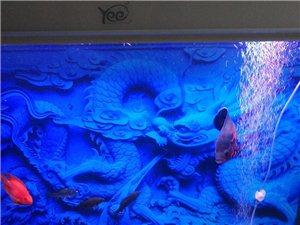 红尾鲶,55-60厘米左右,不想养了0,200块带有,