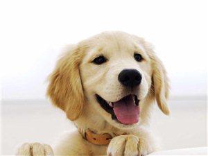 提供宠物狗家庭寄养