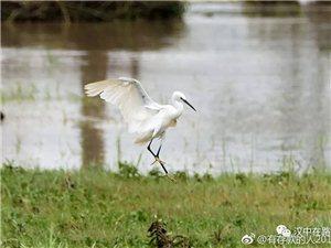 汉中湿地公园作诗一首