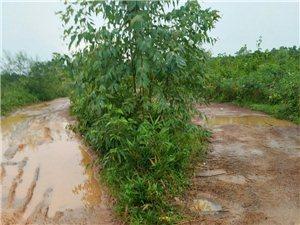 雅星镇路千村通往金川的主要路段,大约一公里,下雨就积水、路滑,每天接送小孩上学要经过这条路都很困难,