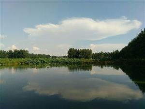 美高梅注册头铺马庄的藕塘鱼塘环境很好