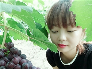 葡萄采摘园开园啦,可以免费试吃。