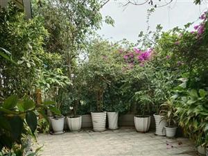 平江路1楼带50平米花园,3室1厅2卫56万元
