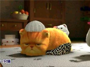 好可爱的猫猫