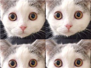 個人,英短小貓一公一母。
