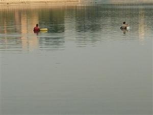 人工湖下网逮鱼了