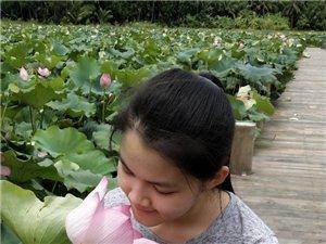 """美少女与��寿洋荷花亲吻之情2018年7月19日上午,经过""""山神""""台风的洗礼,盛夏的"""