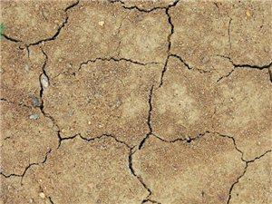 最近新濠天地官网网站县是真的干旱呀,啥时候能下雨呀呀呀!