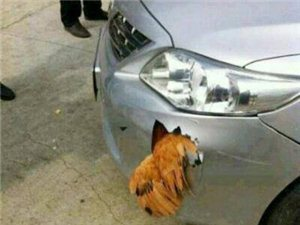 这就是传说中的铁公鸡。