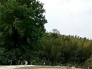 黄桑旅游开发视频