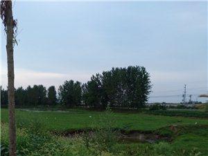 水牛与白鹭