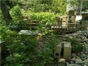 本蜂场出售中蜂300箱品种优良出勤率高