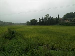 来哇城市套路深欢迎回农村一样的天,不一样的气息来感受一盘乡村的早上,喜欢吗???