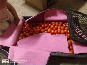 卖小西红柿喽